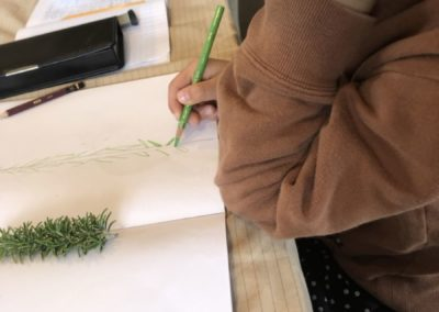 Botanique Montessori à la maison